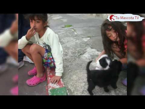 Las mascotas y los niños | Tu Mascota TV