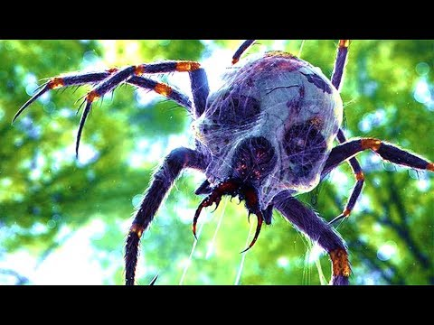 5 Real Life Encounters With Giant Spiders That Cannot Be Explained
