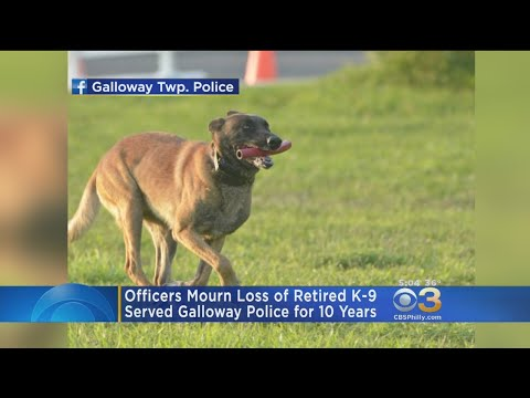 Atlantic County Officers Mourn Loss Of K-9 Officer