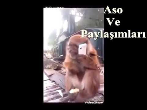 download Kürtçe konuşan maymun