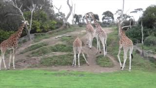 Самое красивое видео, Австралия. 4k(Австралия во всей своей красе, это стоит увидеть)), 2015-12-28T17:56:11.000Z)