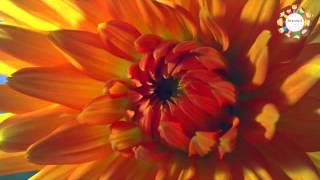 Dâng Cha Đoá Hoa Lòng - Nhạc Thiếu Nhi Tin Lành