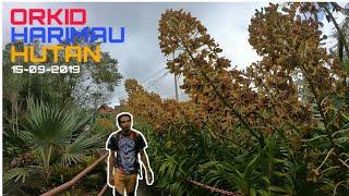 Download 550 Koleksi Gambar Bunga Orkid Hutan Terbaik
