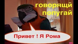 Говорящий попугай Ара завтракает. Попугай Григорий, Наташа и Кеша - не вытирают клюв, Рома-да!