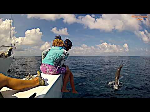 Sailing with Spinner Dolphins Costa Cetacea Media