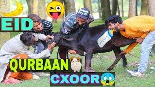 Eid Qurbaan Cxoor Funny Video By Kashmiri rounders
