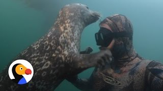 Curious Seal Follows Diver Around Like a Puppy  | The Dodo