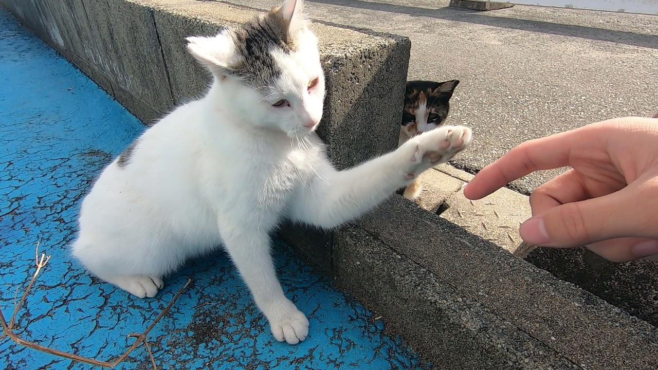 大になってく寛いでいる野良猫が可愛すぎる