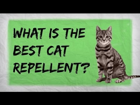 Natural Cat Repellent Best Indoor And Outdoor Repellents For