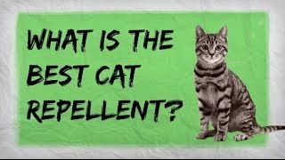 Natural Cat Repellent | BËST Indoor and Outdoor Repellents for Training Cats | Furniture Spray