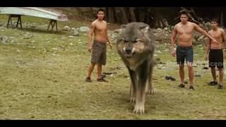 [BEST MOVIE SCENE HD] Werewolf Transformation