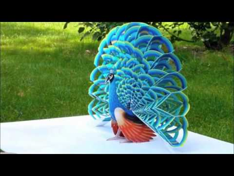 Beautiful Peacock Photos and White Peacock Pictures