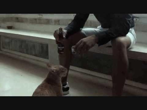 MANICHE: não sejas cão, bebe TAGUS.