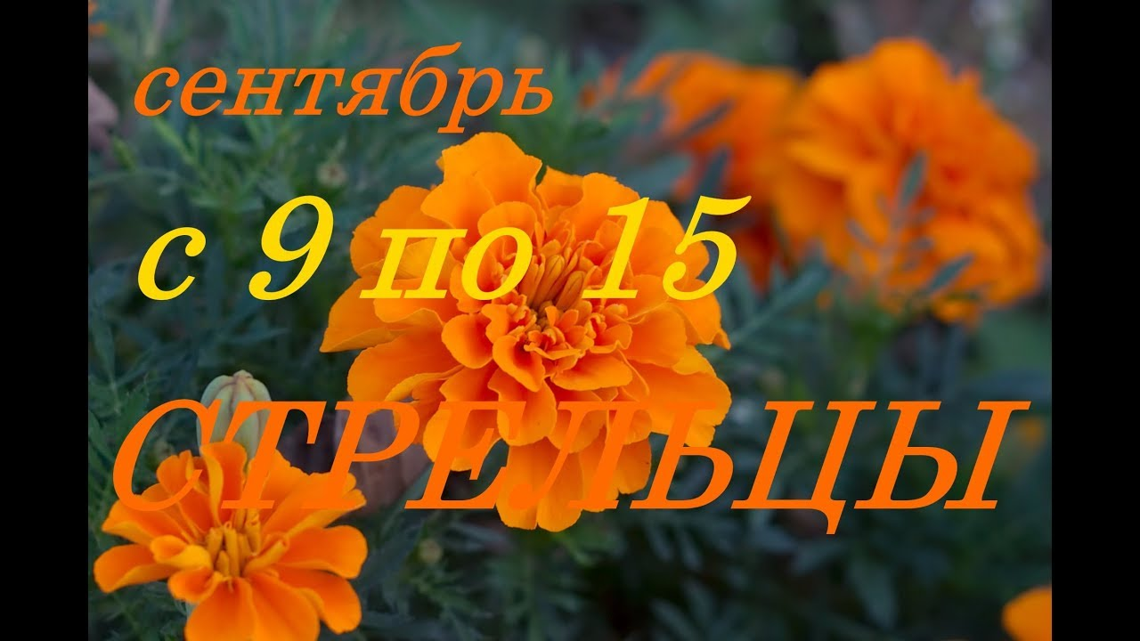 СТРЕЛЬЦЫ. С 9 по 15 сентября 2019 г. ПРОГНОЗ на НЕДЕЛЮ.