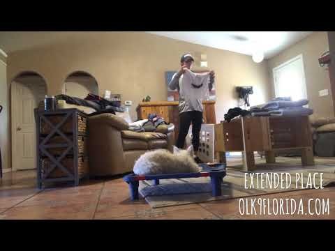 "5 Month Old West Highland Terrier ""Bodhi"" 