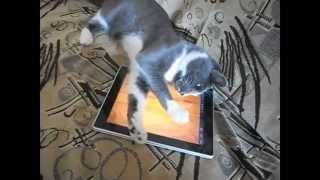 Кот и двоичный код