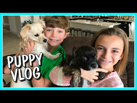 THE DAILY ROUTINE OF HERSHEY AND HARLEY | OUR PUPPY VLOG | We Are The Davises