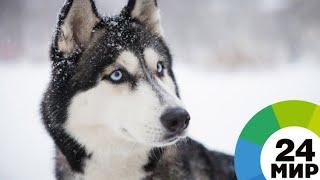 Сколько стоит собака в год Собаки - МИР 24
