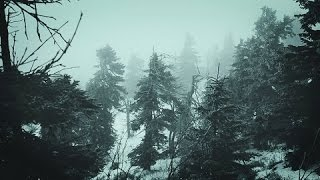 ❄️ Snowstorm Blizzard Wind Sounds For Sleeping, Relaxing ~ Calm Snow Arctic Howling Winter Ambience
