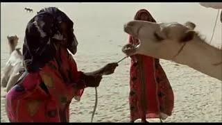 Vents de sable, Femmes de roc - Nathalie Borgers - Au Grand Bivouac