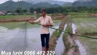 Cách giăng lưới bẫy chim chuyen nghiệp