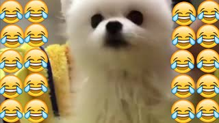 Funny and cute dog videos 😂 ||  try not to laugh || fails || new funny videos