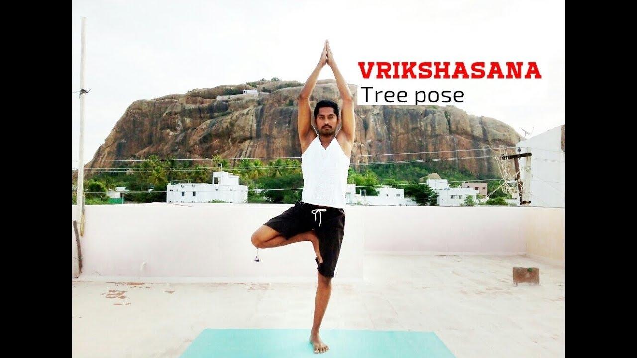 Image result for விருக்ஷாசனம்