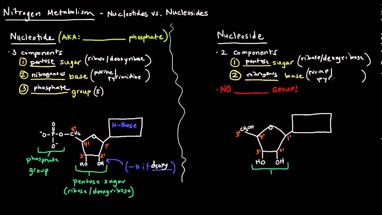 small resolution of nucleotides vs nucleosides