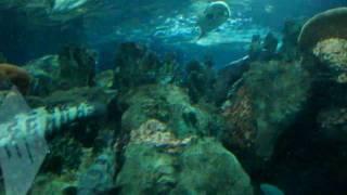 Акулы, групперы... (шанхайский океанариум, сентябрь 2010)(, 2011-01-31T21:21:58.000Z)