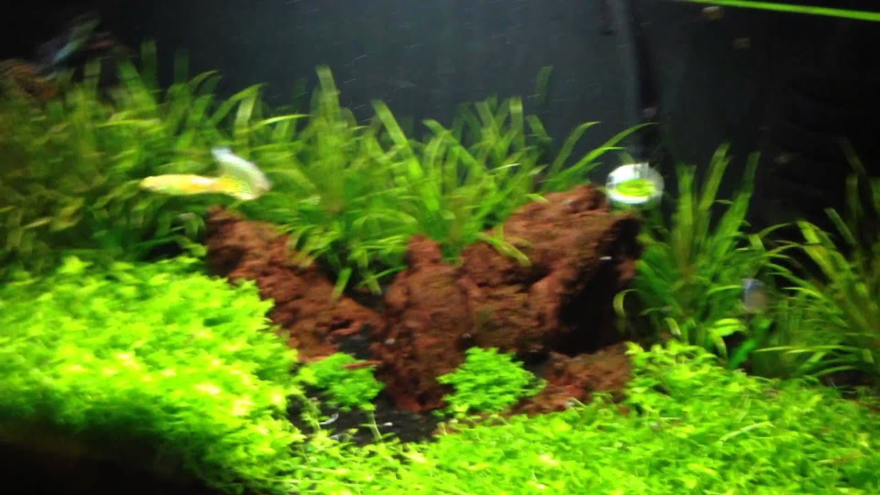 Planted Tank Tips 2 Cloudy Water