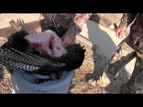 How to clean a wild turkey with Scott Croner from the Nebraska Hunting Company.