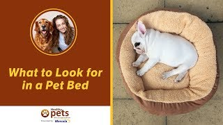 Dr. Becker Discusses What to Look for in a Pet Bed