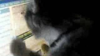 Cat attacking monitor Thumbnail