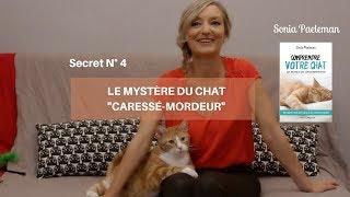 Le mystère du chat caressé-mordeur