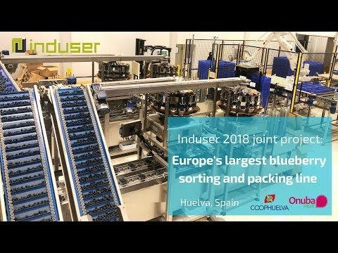 Largest Blueberry Packing Line In Europe: Induser Joint Project 2018