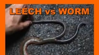 Japan Mountain Leech vs. Giant Earthworm - Real Japan Monsters 日本マウンテンリーチ対ジャイアントミミズ 日本のモンスター