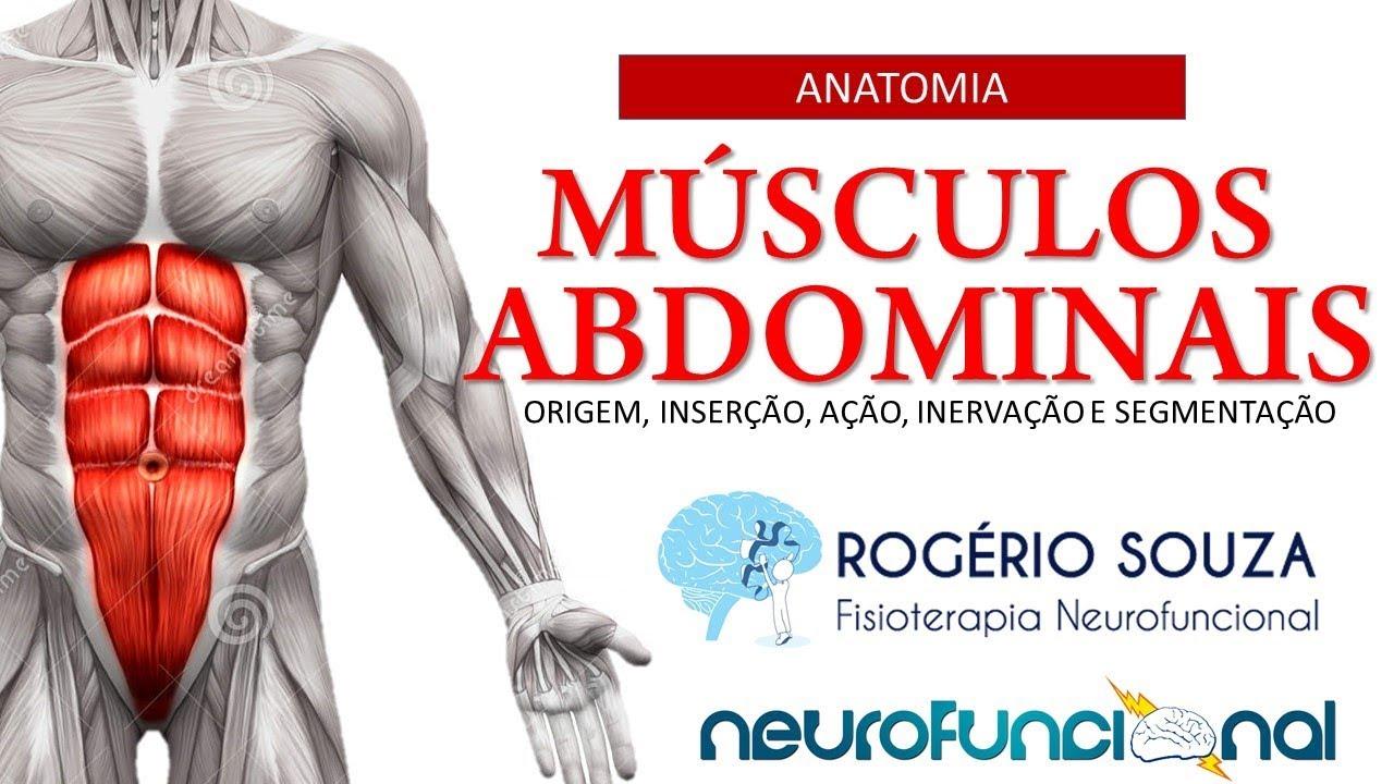 Único Anatomía Músculos De La Ingle Friso - Anatomía de Las ...