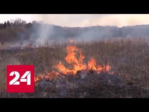 Рослесхоз предупредил о высоком риске появления новых пожаров в ряде регионов РФ - Россия 24