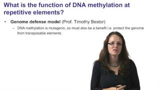6   DNA methylation at intergenic regions and repetitive elements