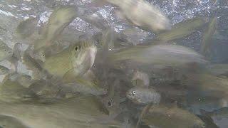Рыбы на строгой диете: как ученые экономят морские ресурсы - futuris