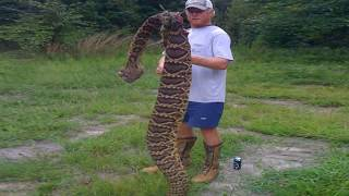World's Largest Rattlesnake Found in Florida!