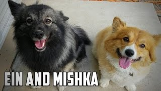 EIN AND MISHKA • A Cow Chop Compilation