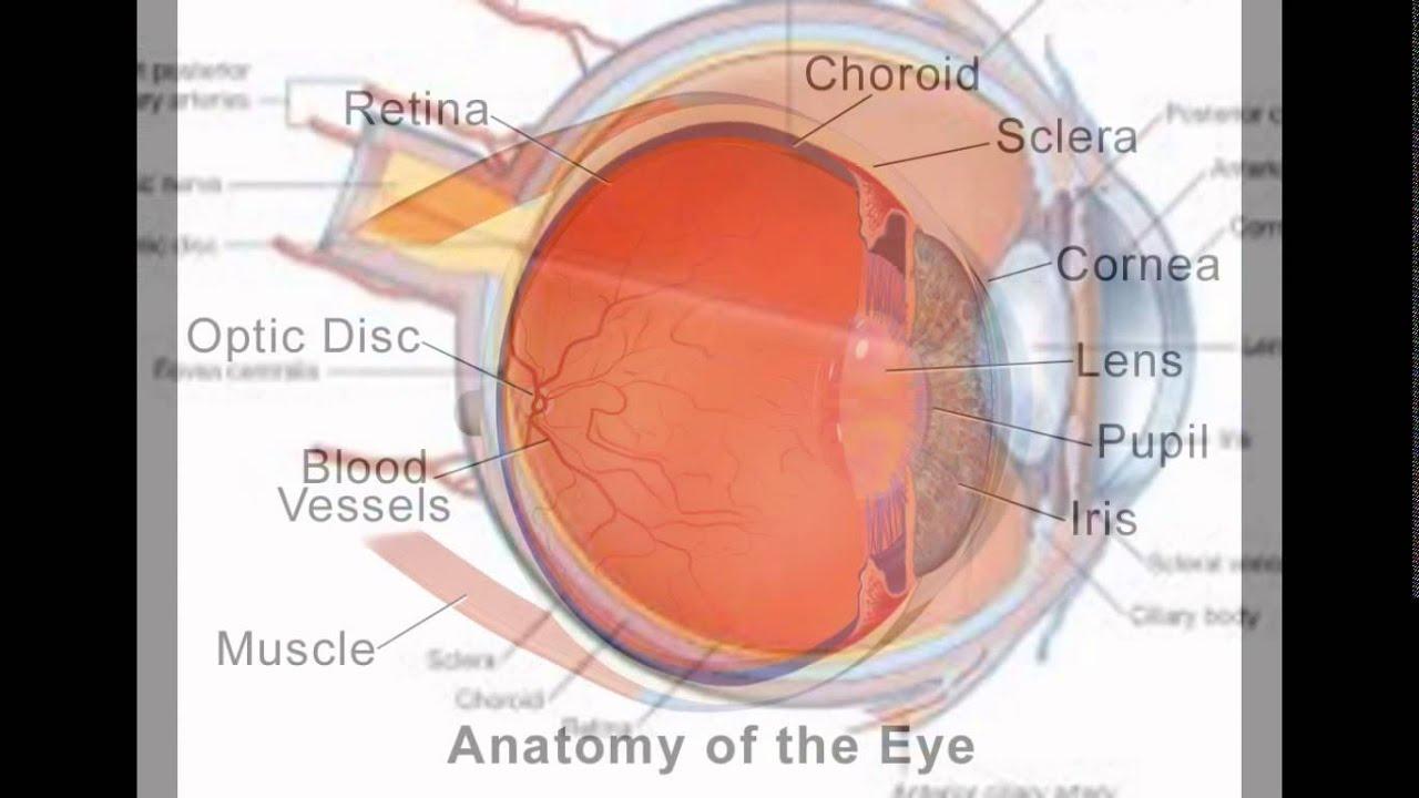 Sclera In Eye - YouTube