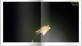 Европейская болотная черепаха | Подводные съемки