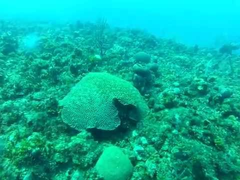 Jamaica Dive