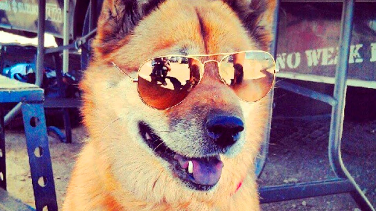 Dogs wearing Sunglasses 34 - YouTube