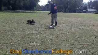 Rusty Dog Training Savanah Tn Dog Obedience College