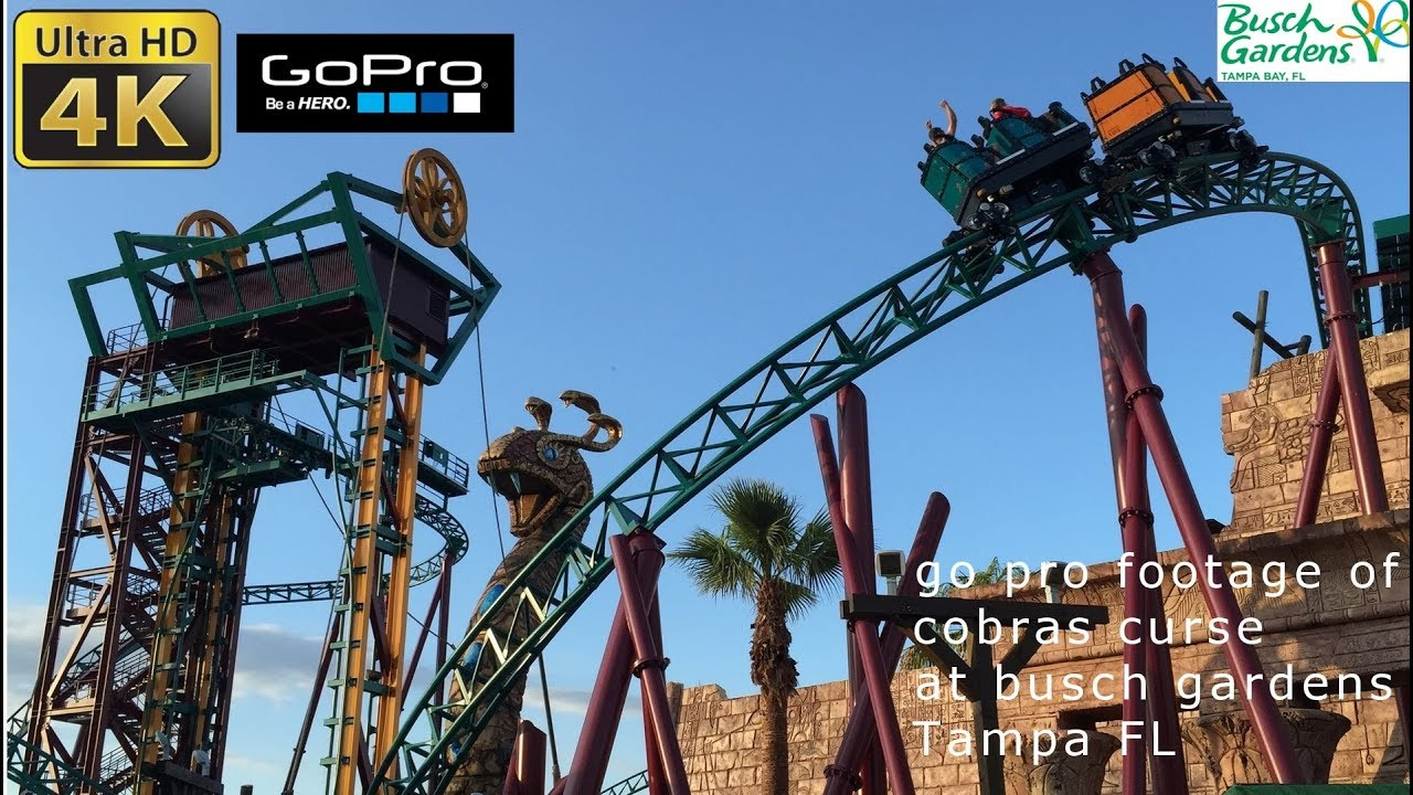 Cobras curse roller coaster with an elevator 4k pov busch gardens tampa 2017 youtube for Busch gardens tampa bay cobra s curse