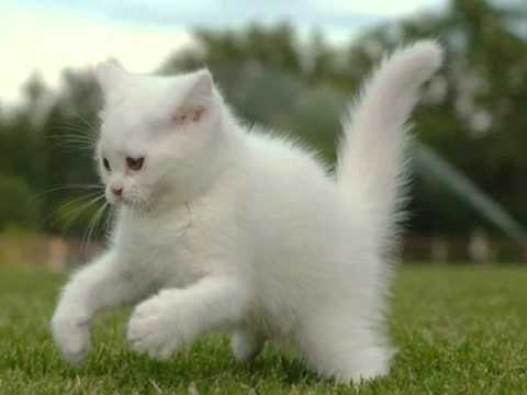 ПОДАРОК ДЛЯ MISS KATY LIZZY делает белого пушистого котенка из .