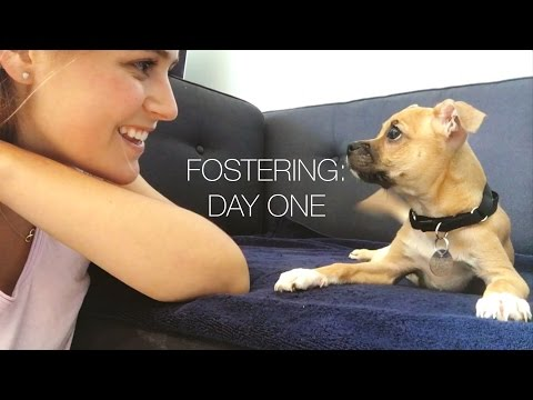 Fostering for the First Time: Day One